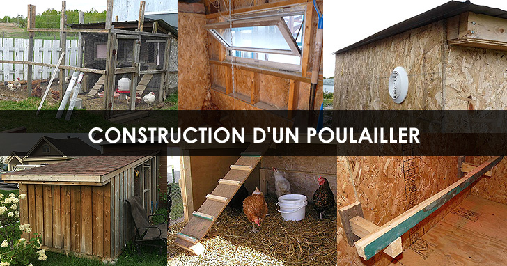 Construction Poulailler